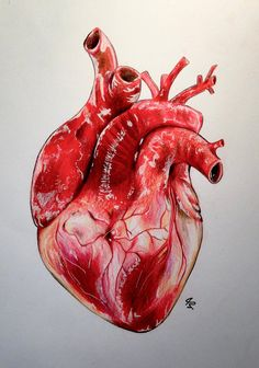 Realistic Human Heart by LunacananYou can find Heart drawing and more on our website.Realistic Human Heart by Lunacanan Heart Anatomy Drawing, Anatomical Heart Drawing, Human Heart Drawing, Heart Drawings, Heart Human Anatomy, Human Anatomy Art, Human Heart Tattoo, Anatomical Tattoos, Skull Drawings