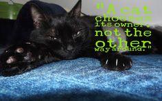 OccupyForLife: Maya, pisica mea neagra/ Maya , my black cat My Black, Maya, Maya Civilization