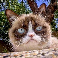 * Gatos Sin Guantes *: Grumpy cat is beautiful