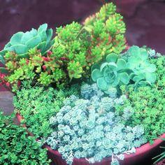 Video: Propagate succulents