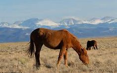 Great pic of Wild horses in Colorado. http://thehorsefoundation.org/