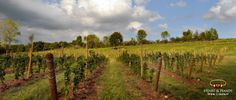 Heart and Hands Winery in serene Union Springs, NY overlooks the eastern shore of Cayuga Lake. Taste their wines made with Pinot Noir and Riesling grapes. Finger Lakes Wineries, Local Attractions, Wine Making, Vacation Villas, Tours, In This Moment, Heart Hands, Pinot Noir