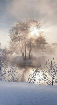 20 Ideas Amazing Art Photography Mists For 2019 Winter Scenery, Winter Trees, Pretty Pictures, Cool Photos, Winter Love, Winter Magic, Cool Art Projects, Snow Scenes, Winter Beauty