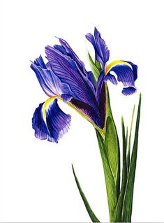 http://www.annaknights.co.uk/contempora ry_botanical_art/Anna_Knights_Contempora ry_Botanical_Art.html
