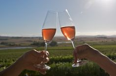 Cape Town: Full Day Wine Tasting Tour, Cape Town | GetYourGuide