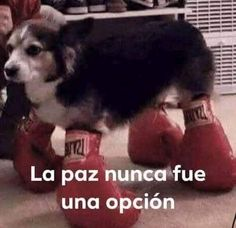 No tengo vida kok kok solo veo memes kok kok me quiero morir kok kok. Response Memes, Current Mood Meme, Spanish Memes, Mood Pics, Quality Memes, Stupid Funny Memes, Fun Funny, Funny Dogs, Wholesome Memes