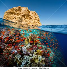 Split shot of the bright coral reef in Ras Muhammad National Park, Red Sea, Egypt