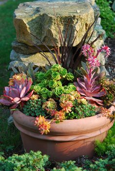 Image result for tropical garden with succulents