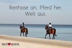 Reithose an, Pferd her, Welt aus.