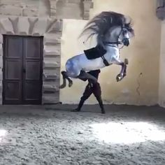 Science Discover اجمل و اقوى حصان في العالم most beautiful and strongest horse in the world Beautiful Arabian Horses Most Beautiful Horses Pretty Horses Animals Beautiful Rare Horses Big Horses Horse Love Funny Horse Memes Funny Horses Beautiful Arabian Horses, Most Beautiful Horses, Pretty Horses, Horse Love, Animals Beautiful, Rare Horses, Funny Horses, Big Horses, Show Horses