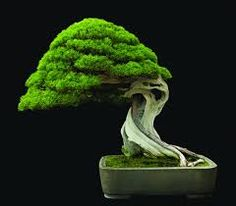 Image result for Bonsai...AWESOME!!!