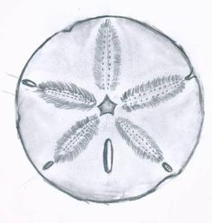 sand dollar-May be with the names of my best friends on it?