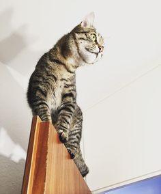 Hi i'm Batman!  #luckythecat #love #cute #catsofsalzburg #unterfoehring #germany #cat #meow #ilovemypet #catlovers #lovekittens #instapet #catsagram #kitten #kitty #catstagram #kittycat #catsofinstagram #ilovemycat #catlove #catoftheday #furry #cats_of_instagram #cats #catlife #katze #katzenliebe #miezekatze #batman