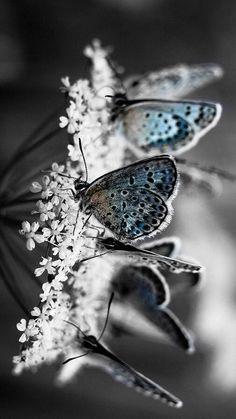 ♡ butterflies ♡