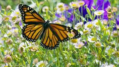 butterflies photography - Google Search