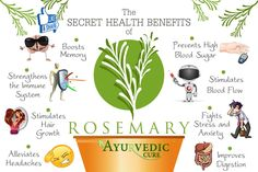 Excellent Health Benefits of Rosemary
