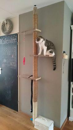 Dog Gadgets, Clever Gadgets, Cat Habitat, Cat Window Perch, Cat Shelves, Wooden Cat, Cat Enclosure, Cat Room, Scratching Post