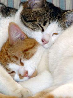 Love...... Looks like Bubbles and Copy. 9na