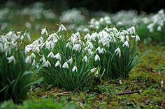 Twitter / Notifications Claire, Conversation, Flora, Twitter, Plants, Plant, Planets