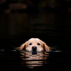 Swimming pup