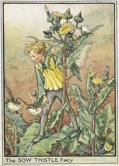 The SOW THISTLE Fairy ~ Cicely Mary Barker ~