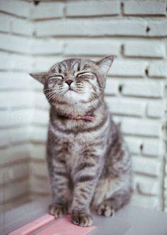 #humeurdujour #ledeclicanticlope / Vite donnez-moi un chaton à câliner !!! Via attackofthecute.com