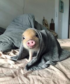 Babe: Pig in the City Cute Baby Pigs, Cute Piglets, Baby Animals Super Cute, Cute Wild Animals, Baby Animals Pictures, Cute Little Animals, Cute Animal Pictures, Cute Funny Animals, Animals Beautiful
