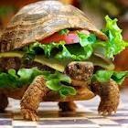 tortue hamburger