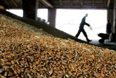 Ukraine harvests 47.1 million tonnes of grain, 8.9 mln tonnes of sunflower