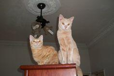 Pimpinha e Russinho em cima do armário- 10 meses