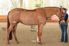 Evaluating Form and Function~A little geometry goes a long way in training your current horse or shopping for your next. Very informative article, might help you understand your horse