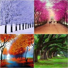 tree four seasons painting Four Seasons Painting, Hotel Four Seasons, Sketch Manga, Green Life, Of Wallpaper, Autumn Summer, Mother Nature, Scenery, Beautiful Pictures