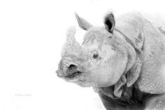 Rhino, Zoo Vienna, Austria