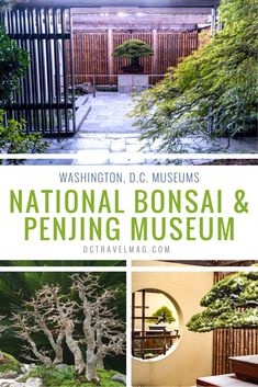Visit and learn more about American bonsai, the National Bonsai Foundation penjing collection, the art of bonsai and more when you step through the doors of the Tips for Visiting the National Bonsai & Penjing Museum at the U.S. National Arboretum. These miniature trees are an ancient art form that brings life to your indoor garden through potted tiny trees and plants. See different styles and techniques used to create these mini plants indoors. #bonsai #washingtondc