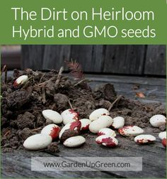 Get the dirt on heirloom, hybrid and GMO Seeds.