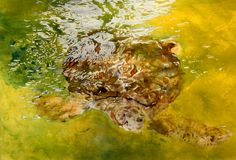 """green turtle flatts, bermuda 2 20"""" x 30"""" micheal zarowsky / watercolour on arches paper / (private collection)"""