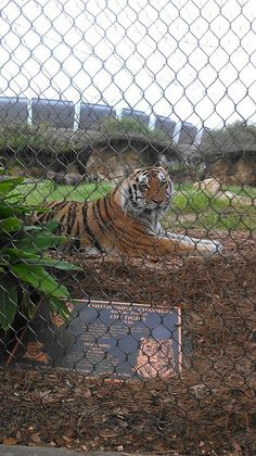 People look at this and read. This is no ordinary tiger. This tiger is our family. Stand up and let me hear you roar. Mike the tiger. We love you