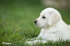 dog pose - profile