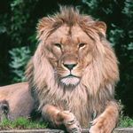 The Chronicles of Narnia - free downloads