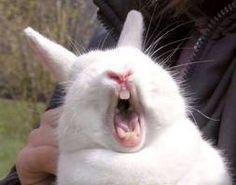 토끼 사진 - Google 검색
