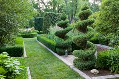 Spiral trimmed spruce (Picea) topiary in formal garden, Louisville, KY, USA