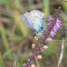 blauw & b(l)oeiend