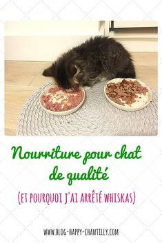 nourriture-pour-chat-de-qualite-et-pourquoi-jai-arrete-whiskas-2
