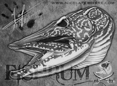 One of the most gnarly freshwater gamefish are pike and musky. Natural born killers, everything about them is tailored for speed and ambushing their prey. Armed with a mouthful of hundreds of teeth, a bad attitude and a big appetite, pike are a true apex predator. Original pencil artwork by Nick Laferriere #fishing #pike #skeleton #skull #fish #nicklaferriere #drawing