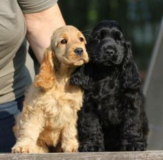 Black and golden...I'll take one of each!