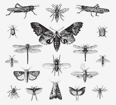 INSECTS VINTAGE VECTOR