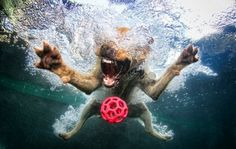 Seth Casteel, Underwater Dog