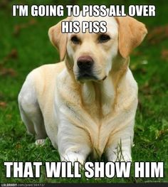 Dog Logic  #humor   #lol  #funnypuppies  Most funny puppies  http://buymelaughs.com/