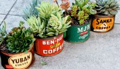 Succulents in vintage coffee tins.