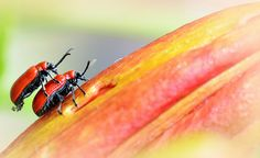 Life on the Lily by Doolallyally, via Flickr